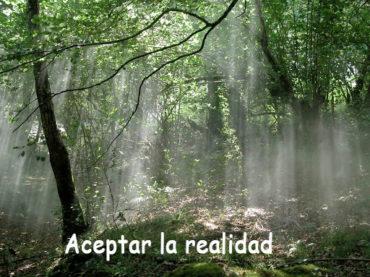 Aceptar la Realidad